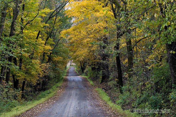 Autumn on RR75