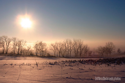 A wall of fog burning off in the sun