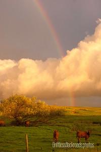 Rainbow in Pasture