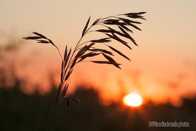 Basking in Sunset