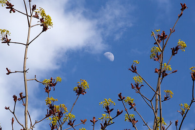 Moon in Spring