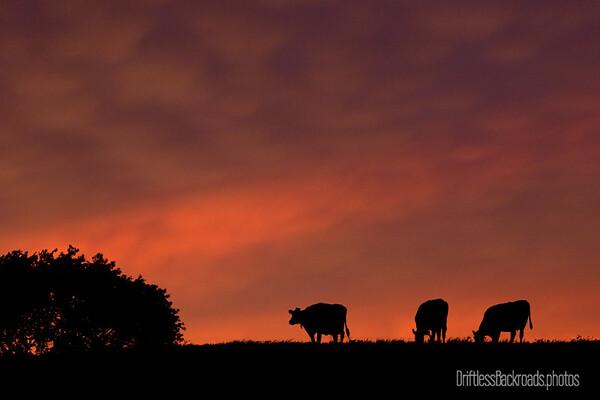 Night Pasture
