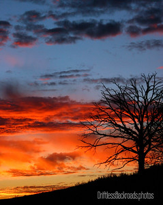 the sunset silhouettes a bare tree