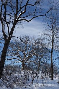 Flocked Oak