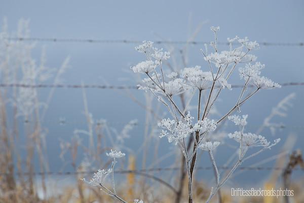 Flocked Weeds