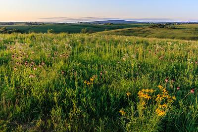 Schurch-Thomson Prairie
