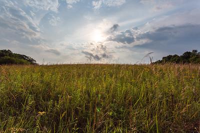 Ridgeway Pine Relict State Natural Area
