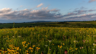 Driftless Prairies
