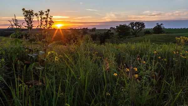 Barneveld Prairie State Natural Area