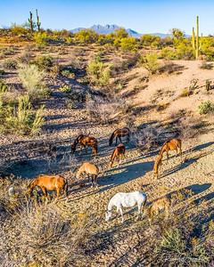 Wild Horses Grazing in the Shadow of Four Peaks Mountain