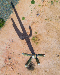 Saguaro Cactus from a Drone