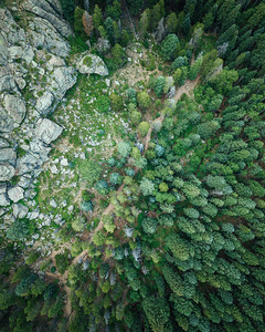 Frankieboy Photography |  Aerial View Path In The Woods | Drone Photography
