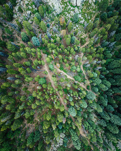 Frankieboy Photography |  Aerial View of Trees and Path | Drone Photography