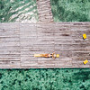 Aerial of a girl on a doc in Bocas del Toro, Panama