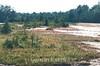 Drosera filiformis, Thread-leaf Sundew; Ocean County, Heritage Minerals Site, Manchester Township, Lakehurst, New Jersey 2015-08-07   4