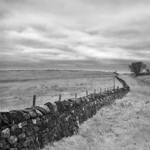 Dry Stane Dyke Study11