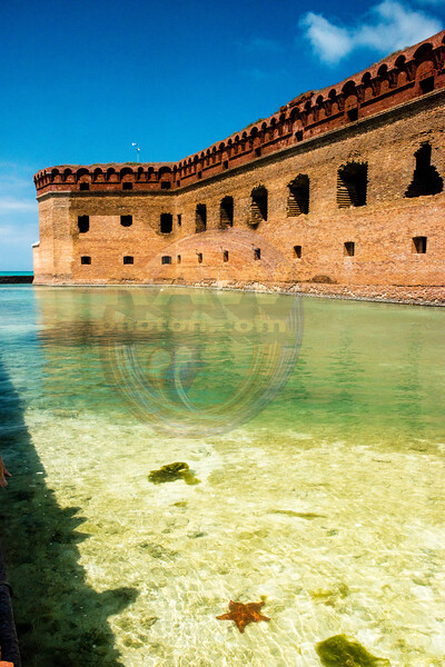 fort Jefferson West Side Star Fish.jpg