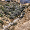 Water in the Washes, White Tank, Joshua Tree