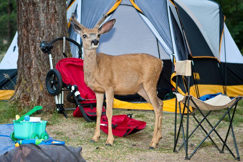 Wallowa Lake State Park Vacation 2009-63
