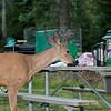 Wallowa Lake State Park Vacation 2009-64