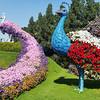 Miracle Garden<br /> Dubai