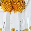 Sheikh Zayed Grand Mosque<br /> Abu Dhabi