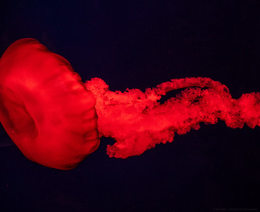 Bright Red Jelly