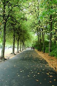 Avenue (1)