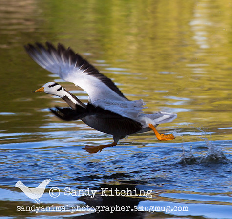 Duckpond April 2016