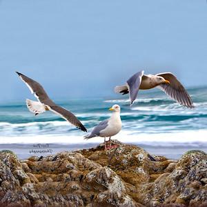 Gull on the rocks