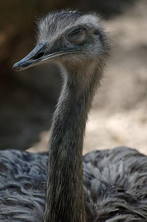 Avian napster