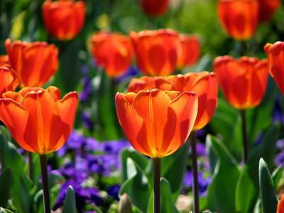 Duke Gardens 040210