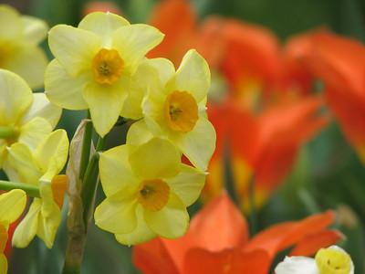Duke Gardens 040414