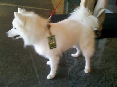 NVIDIA puppy