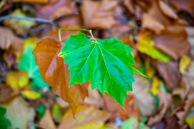 One Green Leaf