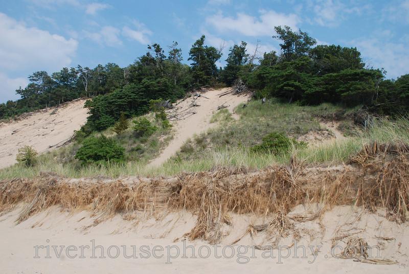 Lake Michigan shoreline dunes, Saugatuck Dunes State Park, Michigan.