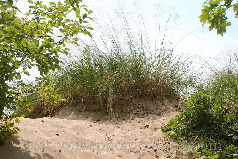 Dune top stablized by grasses.