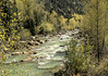 Rapids in the Trees, D&S NGRR, Animas River, CO