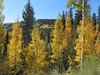 20101009c Near Purgatory aka Durango Mountain Resort