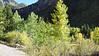 523 Aspen near Telluride