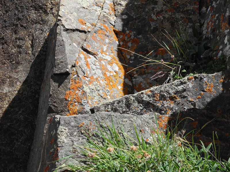 0989 Colorful lichen