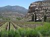 31 Sutcliffe winery