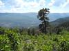35 Down into the Animas Valley