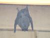 43 A bat at the cabin