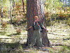 52 Mighty large Ponderosa Pine