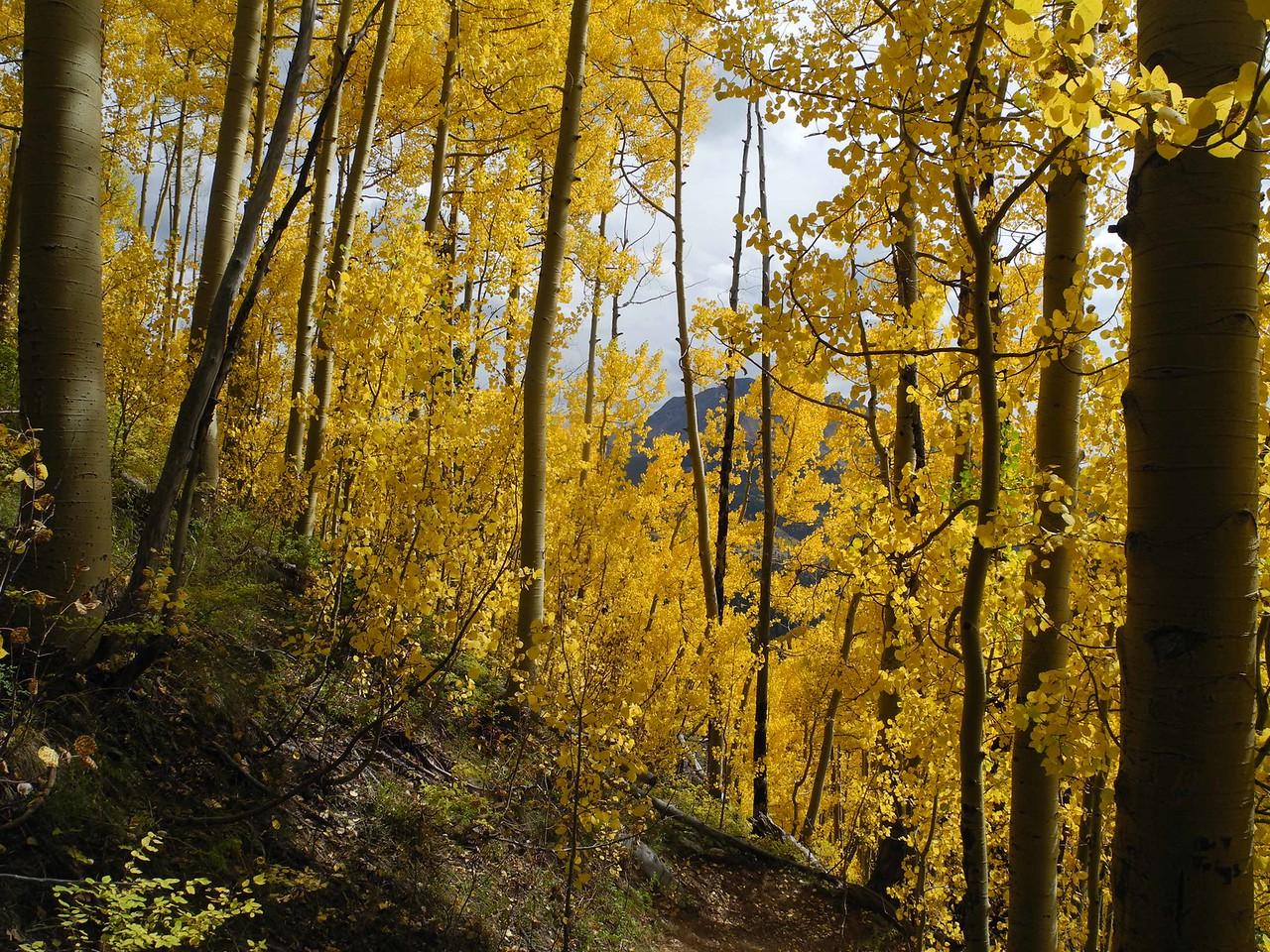 64 Within an aspen grove