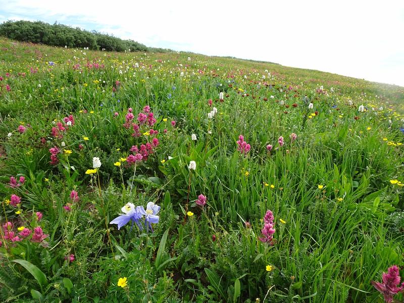 390 Flower land