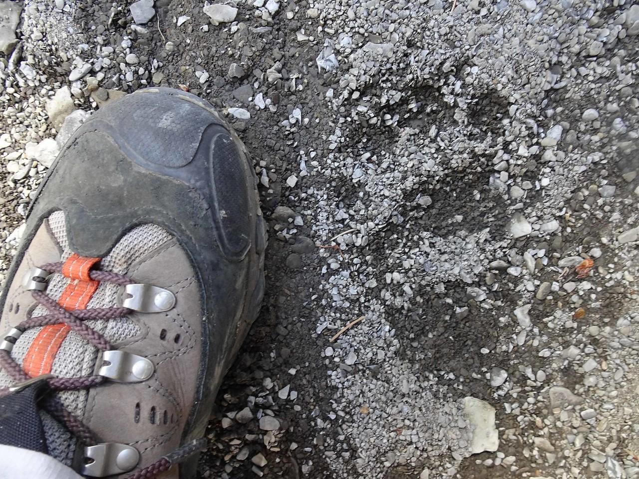10 A bear footprint, believe rear foot