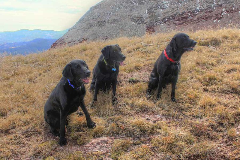 Our 4 legged companions.    (Thanks for Chris Blackshear for this photo.)