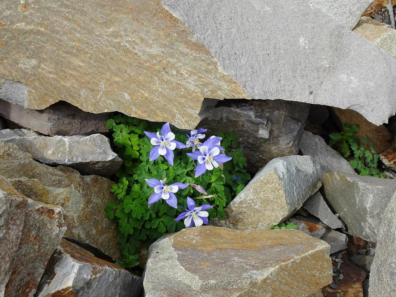 68 A high altitude rock garden